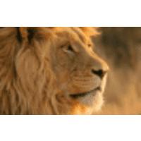 Green Lion Group LLC logo